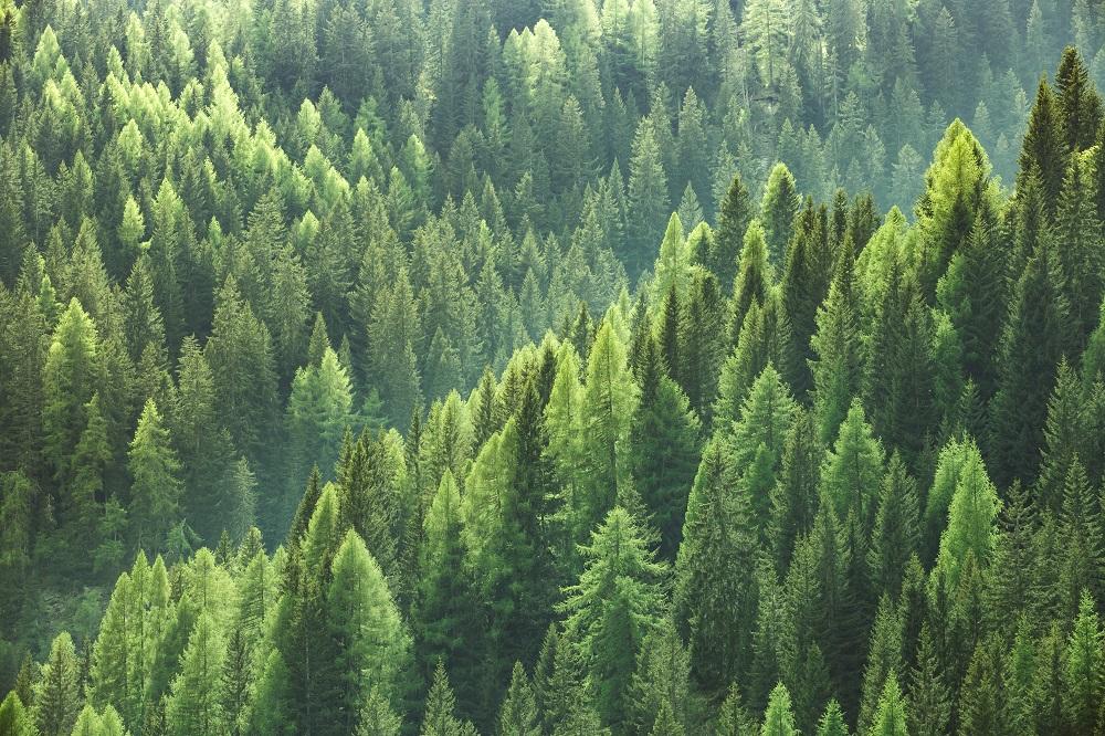 USDA Forest Service Awards WBD $25M Blanket Purchase Agreement